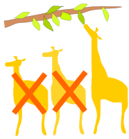 The giraffes able to eat high leaves are better at surviving